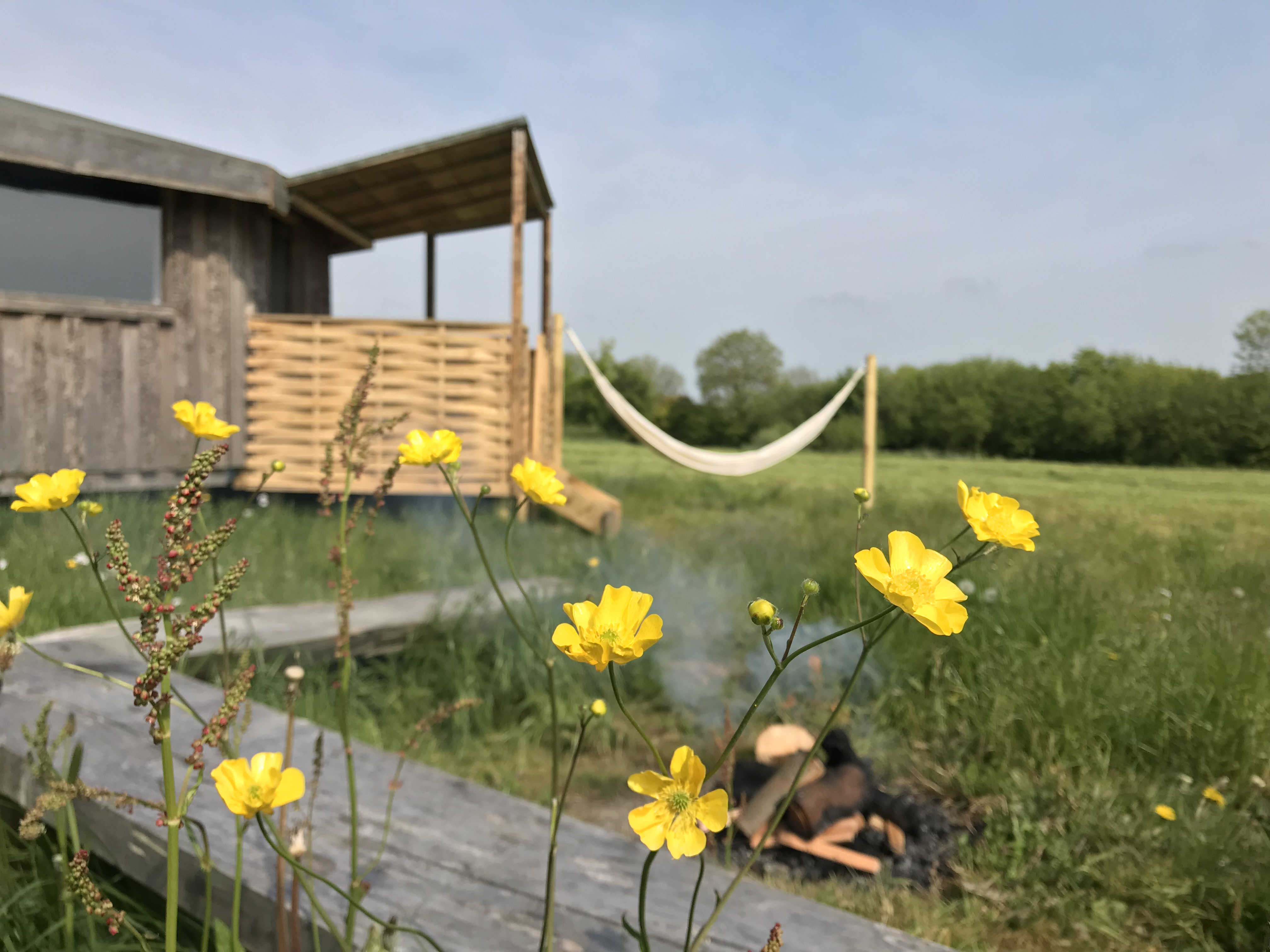 cabin with hammock in field with buttercups